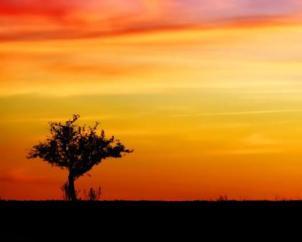 Melancholie als seelische Grundstimmung im Foto eines Sonnenuntergangs. Im Hintergrund ein rot-oranger bis violett verfärbetr Abendhimmel. Im Vordergrund am linken Bildrand ein dunkler und alleinstehender Baum
