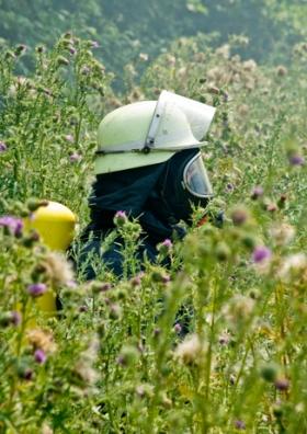 Heuschnupfen - Mit Atemschutz in einer Blumenwiese: Etwas übertrieben!